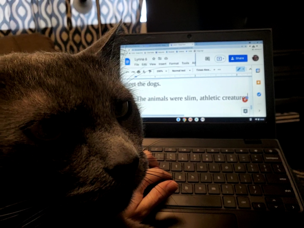 Gray cat sitting on arm and preventing writer from using laptop.